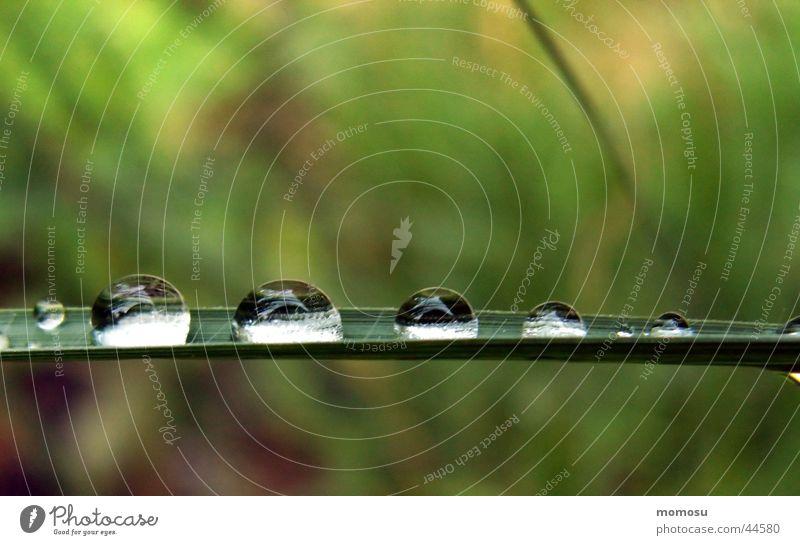 tropfengalerie Wasser Wiese Gras Regen Wassertropfen nass Kugel Halm