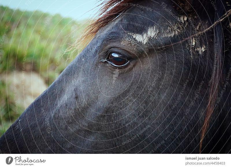 schöne schwarze Pferd Porträt Tier wild Kopf Auge Ohren Behaarung Natur niedlich Schönheit elegant wildes Leben Tierwelt ländlich Wiese Bauernhof Weidenutzung
