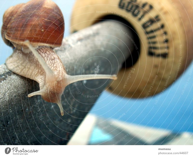 snail on board Freizeit & Hobby Schnecke Achse