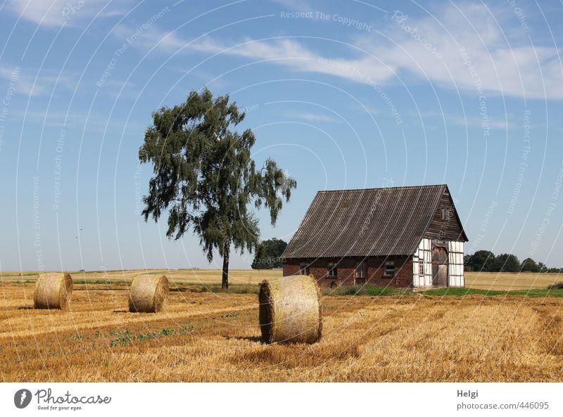 Erntezeit... Umwelt Natur Landschaft Pflanze Himmel Sommer Schönes Wetter Baum Feld Dorf Haus Bauwerk Gebäude liegen stehen authentisch außergewöhnlich