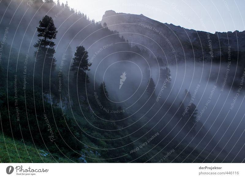 Morgens um 6 Uhr ist die Welt noch in Ordnung Umwelt Natur Landschaft Pflanze Sommer Klima Wetter Schönes Wetter Nebel Baum Felsen Alpen Berge u. Gebirge