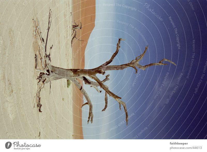 Death Vlei Afrika Wüste Namibia Namib Sossusvlei