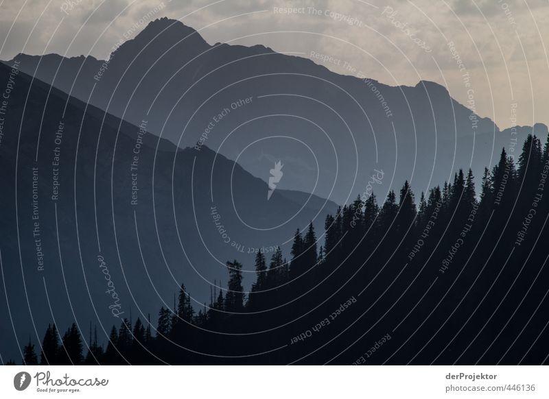 Sonnenuntergang Blau-Schwarz am Königssee Natur Ferien & Urlaub & Reisen blau Sommer Pflanze Baum Landschaft Freude schwarz Wald dunkel Umwelt Berge u. Gebirge