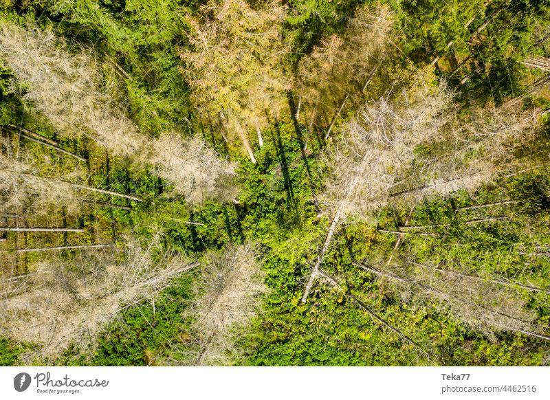 tote Bäume von oben Toter Baum Baumschatten Wald Wald von oben von oben nach unten Sonne Schatten Nadelbaum Mischwald gefällter Wald Klimawandel Borkenkäfer