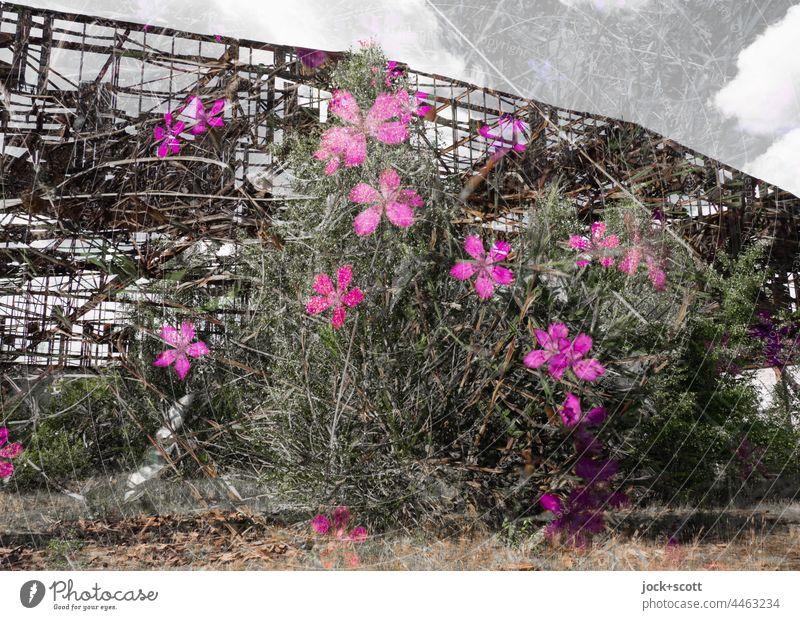 Lost Land Love - die Blumen blühen vor dem Hangar lost places Doppelbelichtung Ruine Natur Renaturierung verfallen Blühend Endzeitstimmung Himmel Wolken