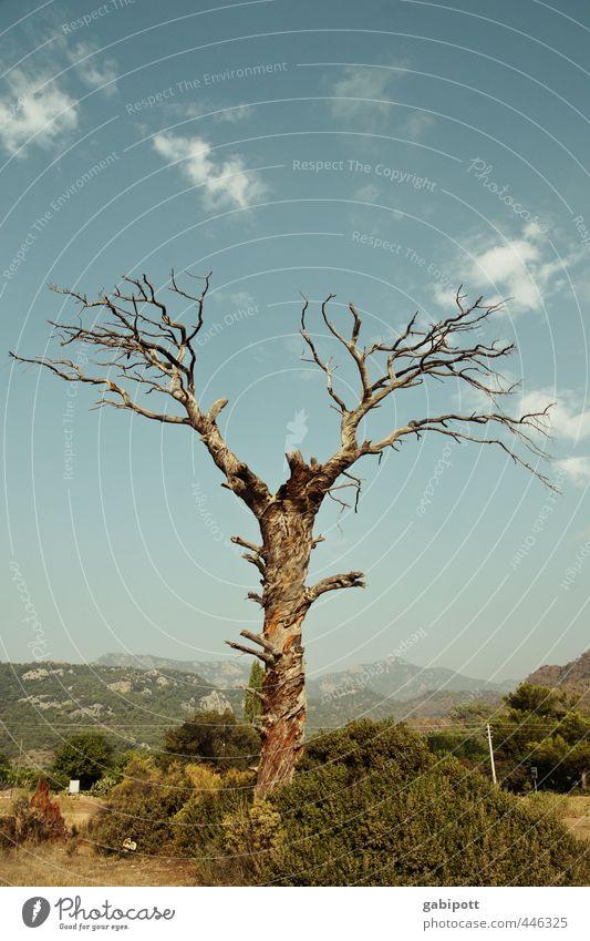 Baumgeweih Landschaft Pflanze Himmel Sommer Berge u. Gebirge alt kaputt natürlich trashig trist trocken blau braun Zufriedenheit Bewegung bizarr Vergänglichkeit