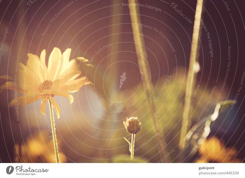 Spätsommerglück Natur Pflanze Sommer Blume Landschaft Wärme Gefühle Blüte Zeit braun gold Idylle Zufriedenheit Sträucher Fröhlichkeit Vergänglichkeit