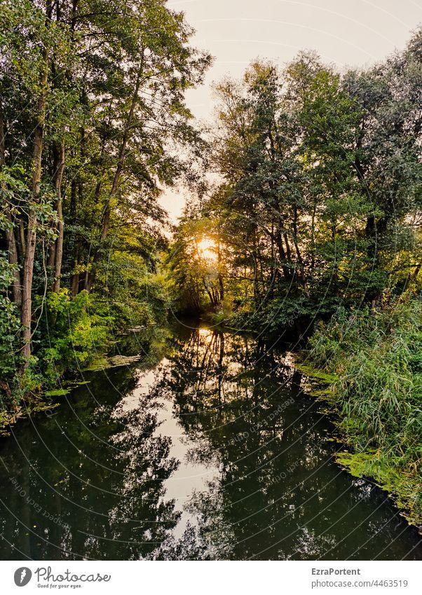 um Himmels willen Wald Fluss Sonne Wasser Bäume Natur grün Schatten Reflexion & Spiegelung Spiegelung im Wasser Baum Sonnenuntergang Landschaft ruhig Umwelt