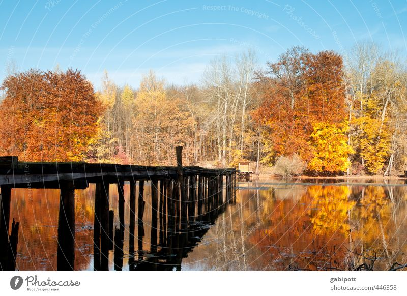 Herbst kommt Umwelt Landschaft Wasser Himmel Sonne Schönes Wetter Baum Wald Seeufer blau braun gelb gold Idylle Lebensfreude Vergänglichkeit