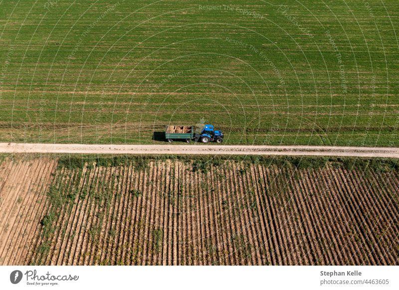 Luftaufnahme eines Traktors bei der Kartoffelernte, mit vielen aufgestapelten Kartoffeln. Gemüse Lebensmittel Ernte organisch Ackerbau frisch roh Bauernhof