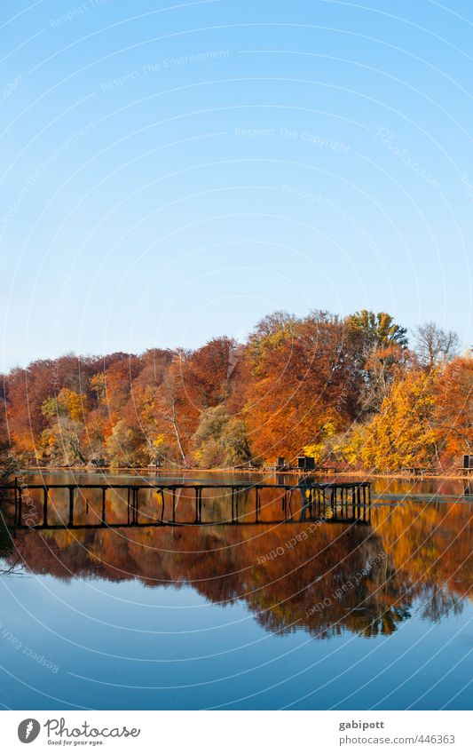 farbenfroh Umwelt Natur Landschaft Urelemente Wasser Himmel Wolkenloser Himmel Herbst Schönes Wetter Baum Wald Küste See Duft natürlich blau braun mehrfarbig