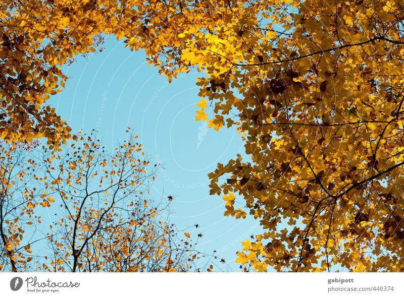 Herbstanfang Umwelt Natur Himmel Wolkenloser Himmel Sonne Sonnenlicht Schönes Wetter Pflanze Baum Blatt Wald Freundlichkeit Fröhlichkeit natürlich braun