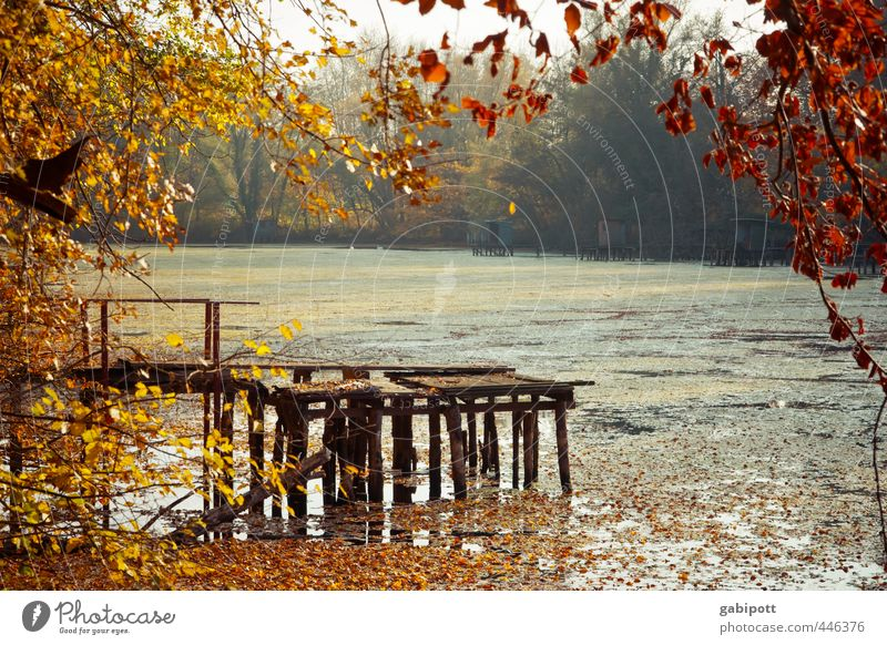 Herbst kommt Natur Landschaft Wetter Schönes Wetter Pflanze Baum Sträucher Wald Seeufer Fluss Wärme braun gelb gold Zufriedenheit Lebensfreude Gelassenheit