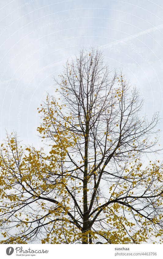 herbstbaum Baum Herbstbaum Laub Blätter gelb herbstlich Natur Herbstfärbung Jahreszeit Äste Vergänglichkeit Herbstbeginn Menschenleer Herbstwetter Herbstwald