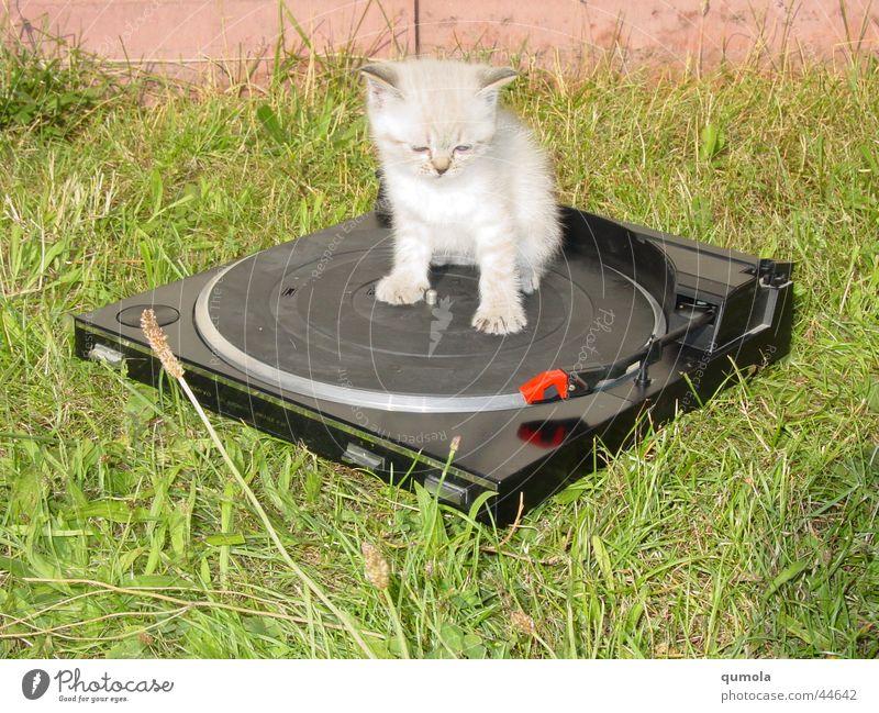 Cat-Music Katze Natur grün weiß Tier schwarz Tierjunges Gras Party liegen Musik süß weich Rasen Fell Haustier