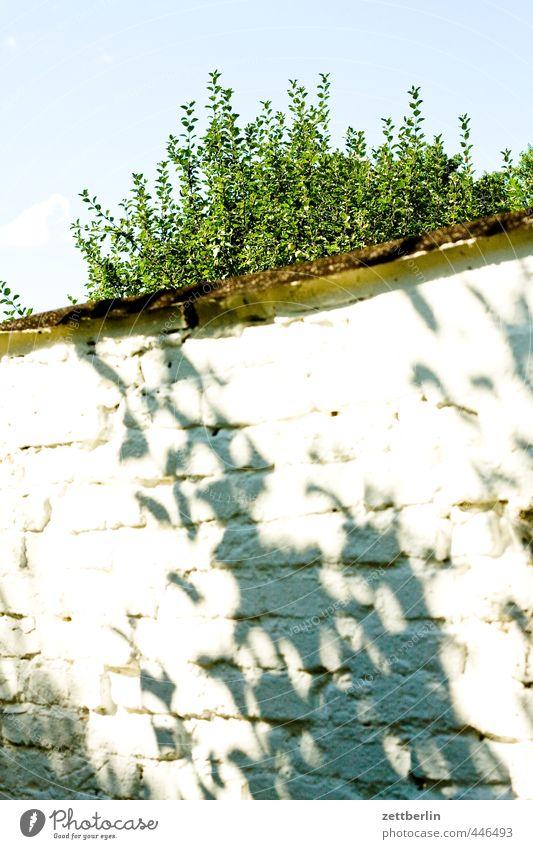 Mauer Himmel Ferien & Urlaub & Reisen schön weiß Sommer Baum Erholung ruhig Blatt Wand Garten Park Wohnung Häusliches Leben Tourismus