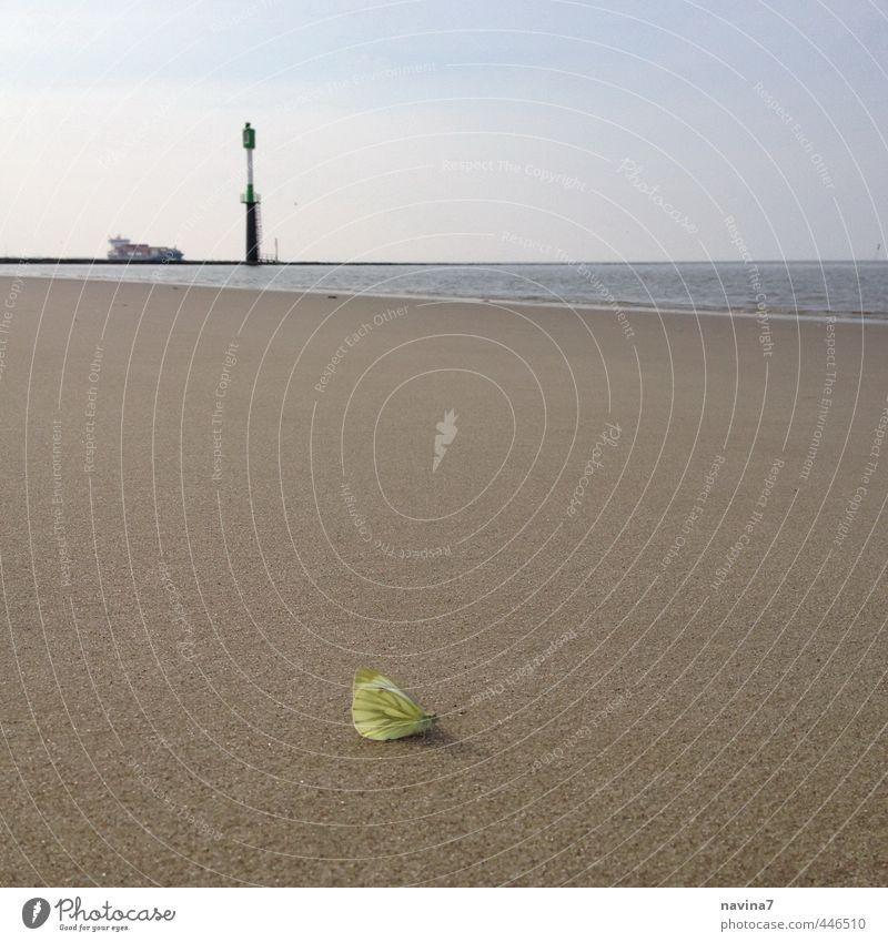 großer kleiner Zitronenfalter Natur Wasser Sommer Erholung Einsamkeit ruhig Tier Strand gelb klein Schwimmen & Baden Sand warten einzigartig Unendlichkeit Schmetterling