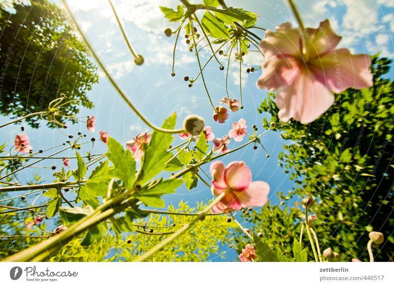 Standardfrosch Natur Sommer Pflanze Erholung Blume Freude Umwelt Blüte Glück Stil Garten Wetter Park Freizeit & Hobby Zufriedenheit Klima