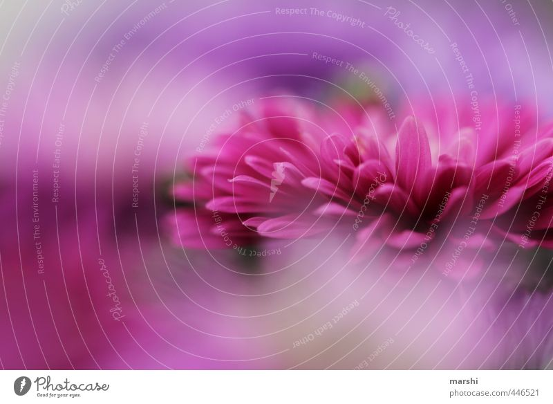 summerblues Natur schön Sommer Pflanze Baum Landschaft Blüte rosa Blühend violett Blütenblatt sommerlich