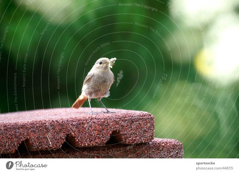Einsames Vögelchen Einsamkeit Vogel Körperhaltung Gezwitscher Partnersuche