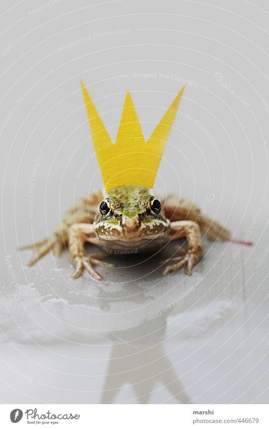 *KÜSS MICH* Natur Tier Frosch 1 gelb grün Krone Froschkönig Märchen Geschichtsbuch Reflexion & Spiegelung Blick Blick in die Kamera warten Küssen klein lustig