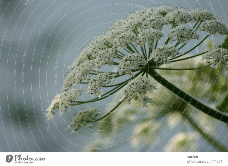 Naturansichten Wasser Blume Pflanze ruhig Farbe Blüte See Landschaft Küste Kunst