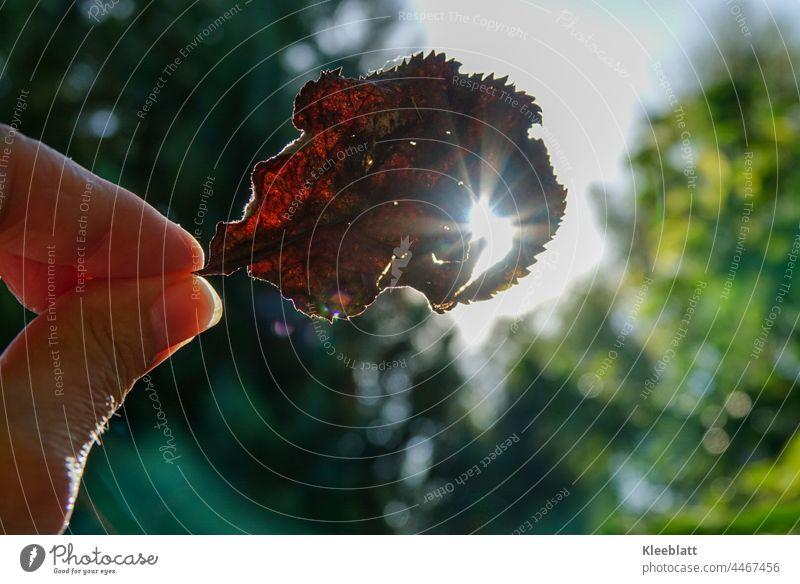 Herbst - Lich (t) Frauenhand hält ein abgestorbenes Blatt der Sonne entgegen - Hintergrund  unscharf Licht herbstlich Herbstlaub Herbstbeginn Herbstlandschaft
