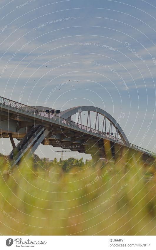 Waldschlößchenbrücke in Dresden Elbe Brücke Architektur Stadt Sachsen Elbufer Ferien & Urlaub & Reisen Reisefotografie Städtereise Tourismus Verkehr Autofahren