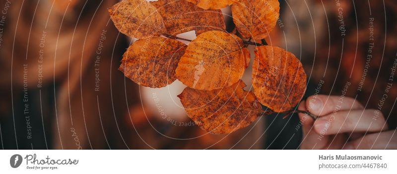 Hand, die Herbstblätter hält, Ansicht von oben, Bannerabdeckung Herbstfarben Herbstlaub Herbst-Vibes Hintergrund Transparente schön schöne Frau Schönheit