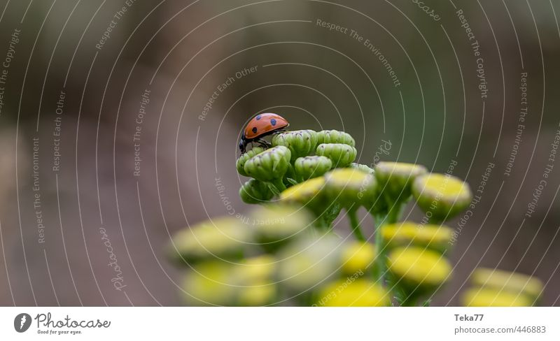 the long journey #1 Umwelt Natur Landschaft Pflanze Tier Blume Nutztier Käfer Gelassenheit geduldig ruhig Marienkäfer Farbfoto Gedeckte Farben Detailaufnahme
