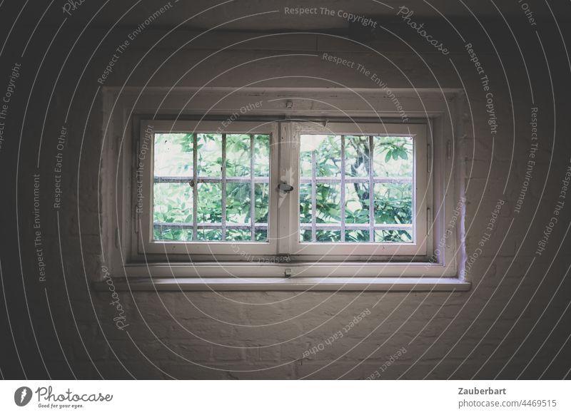 Blick aus vergittertem Fenster ins Grüne, Keller oder Gefängnis Gitter Zelle gefangen weiss Kalk Wand Ausweg öffnen geschlossen Mauer trist Ausblick grün