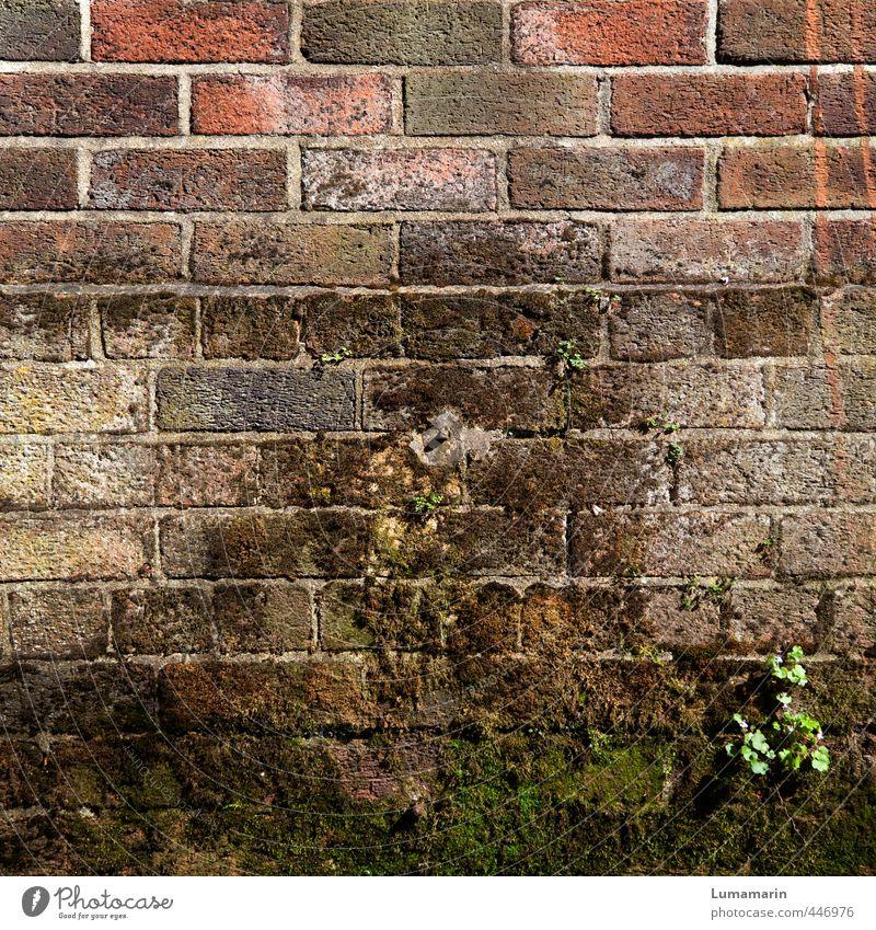 Kulturlandschaft alt Pflanze Ferne Wand Mauer Architektur braun Fassade Häusliches Leben stehen Wachstum hoch geschlossen einfach Schutz