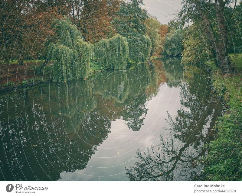 Mystische Baumlandschaft spiegelt sich im Wasser Bäume Landschaft Fluss Natur Wald Umwelt grün Außenaufnahme Farbfoto Tag Menschenleer Pflanze ruhig Idylle