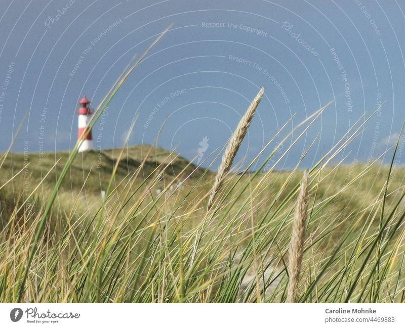 Leuchtturm am Strand auf Sylt Erholung Natur Sand Landschaft Nordsee rot weiss Deutschland Friesland Gebäude Schleswig-Holstein Leuchtfeuer Gras Grashalm