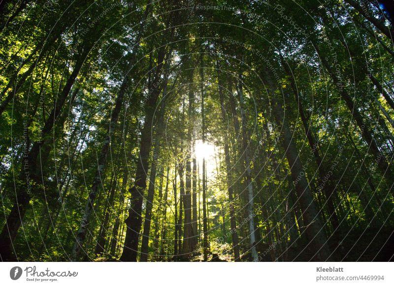 Lichtstimmung- Sonnenstrahlen  dringen geheimnisvoll durch die Grünen Bäume - Stille Stimmung Unschärfe Natur Stimmungsbild natürliches Licht Lichteinfall ruhig
