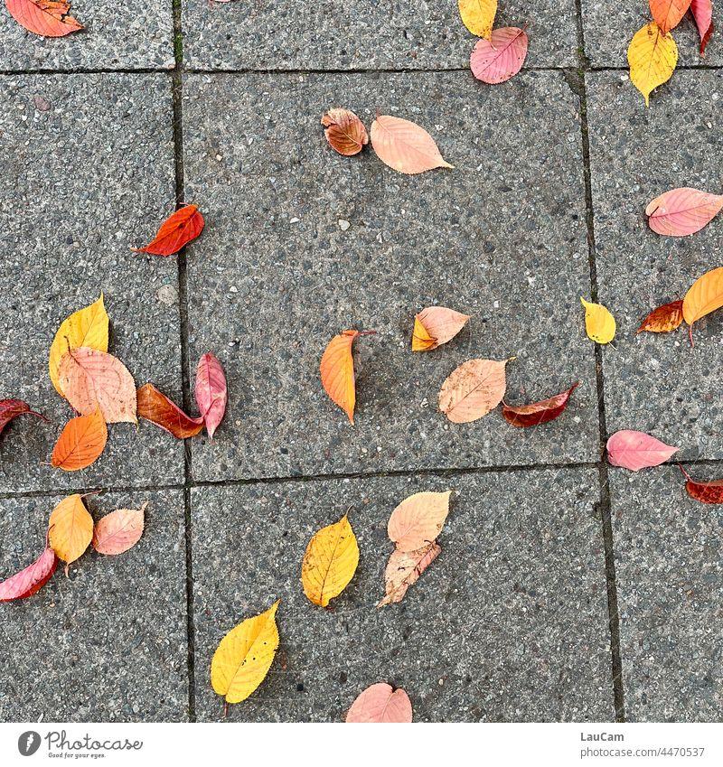 Herbstanfang - bunte Blätter auf dem Asphalt Blatt Laub Laubwerk Herbstlaub Herbstfärbung Herbstbeginn Natur Jahreszeiten Vergänglichkeit herbstlich