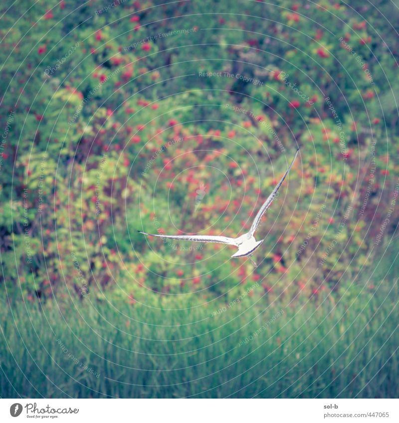 gleiten Umwelt Natur Pflanze Gras Sträucher Park Feld Republik Irland Vogel Möwe 1 Tier elegant frei Gesundheit natürlich wild grün weiß Tierliebe