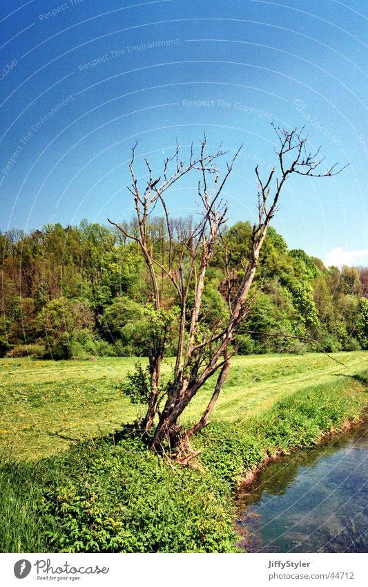 Tod oder lebendig Wasser Himmel Baum Ferien & Urlaub & Reisen Einsamkeit Wald Wiese Freiheit Luft Bach vertrocknet