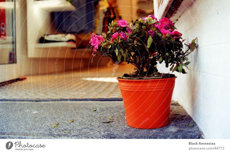 Eingangs-Blümchen Blume Topf Skateladen Lister Meile Hannover obskur Tür Treppe