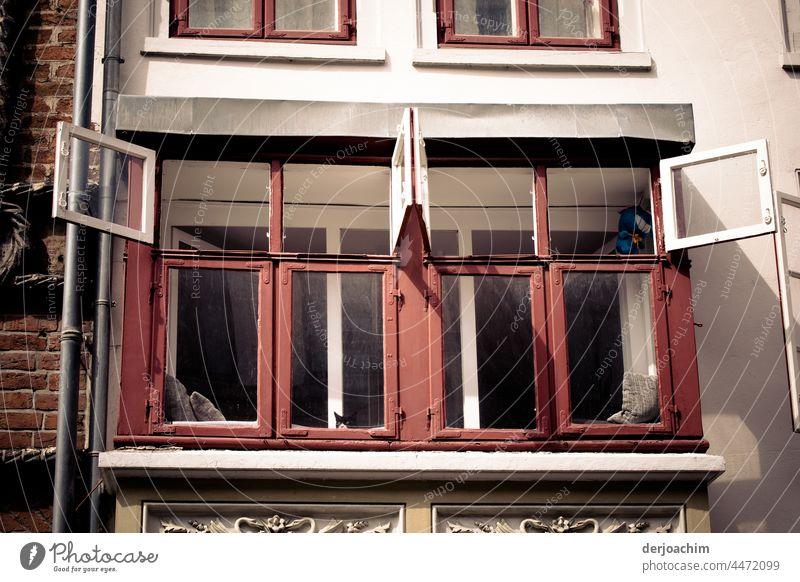Es ist Sommer. Die Oberen Fenster werden ganz aufgemacht,  damit frische Luft in das Zimmer kommt. Die Fenster Flügel von innen haben weiß und von Außen rote Farbe. Unter dem Rand von dem einen  Fenster ist ein Katzenkopf zu sehen.