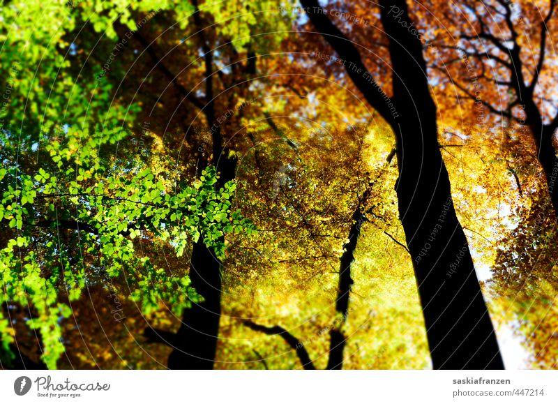 Herbstfarben Himmel Natur grün Pflanze Baum Erholung Landschaft schwarz Wald gelb Umwelt Freiheit Holz Blüte natürlich