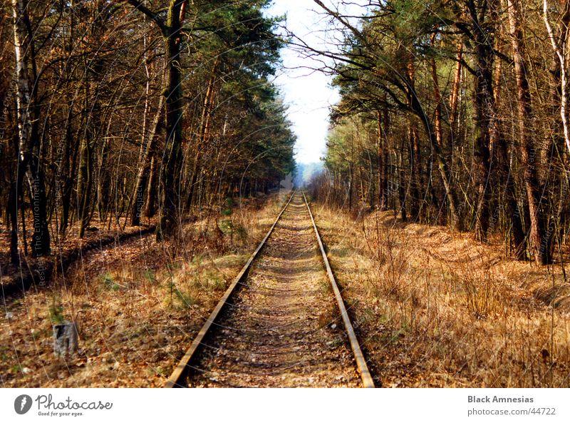 wohin? Wald Nadelbaum Gleise Ferien & Urlaub & Reisen Schönes Wetter Polen Spaziergang