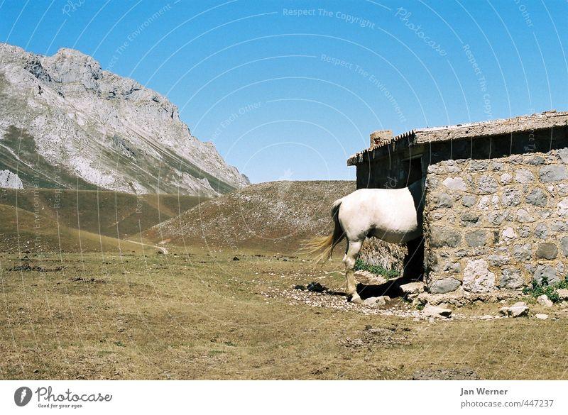 Schattenplatz Sommer Sonne Erholung ruhig Tier Berge u. Gebirge Wärme Stein Wetter Klima Häusliches Leben Schönes Wetter Schutz Hügel Wellness Pferd