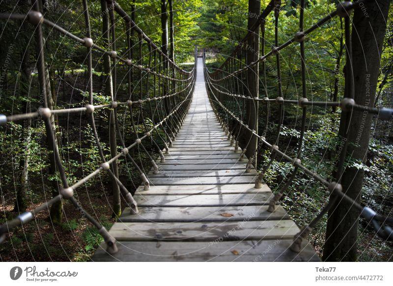 Der Rothaarsteig rothaarsteig rothaargebirge wald wälder wanderweg hängebrücke wandern deutschland siegen wittgenstein sauerland