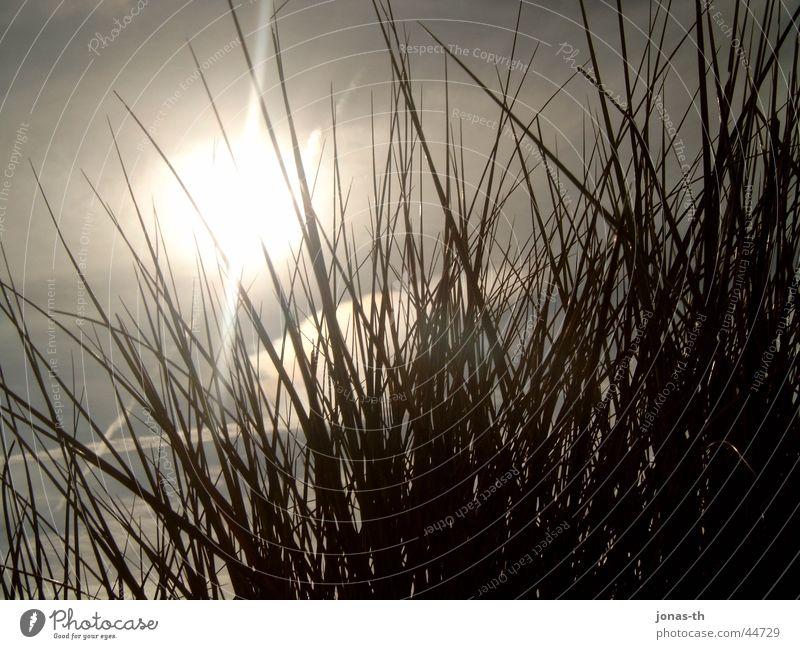 Sonnenuntergang im Frühling Natur Sommer Strand Sand Landschaft