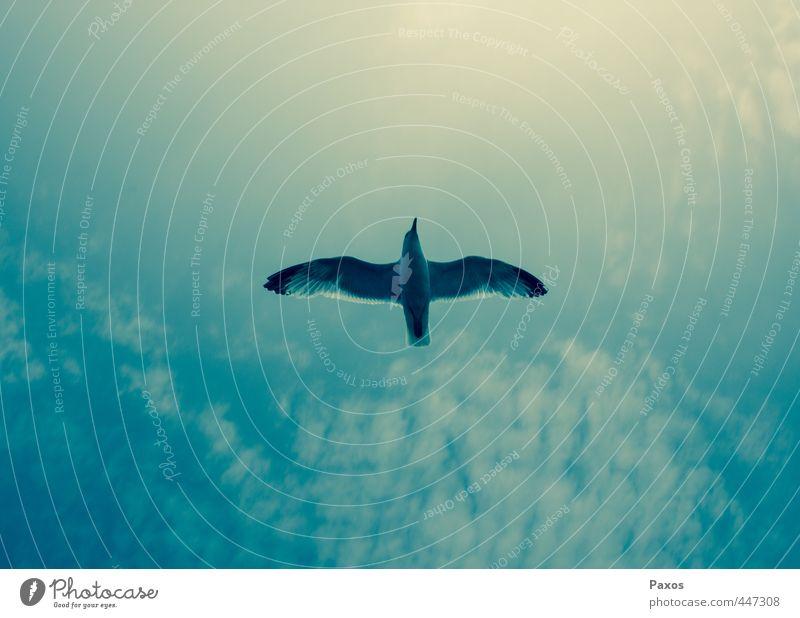 Bird in the sky Natur Himmel Sommer Vogel 1 Tier Erholung fliegen träumen Freundlichkeit positiv blau grün Gefühle Glück Tierliebe authentisch Höhenangst