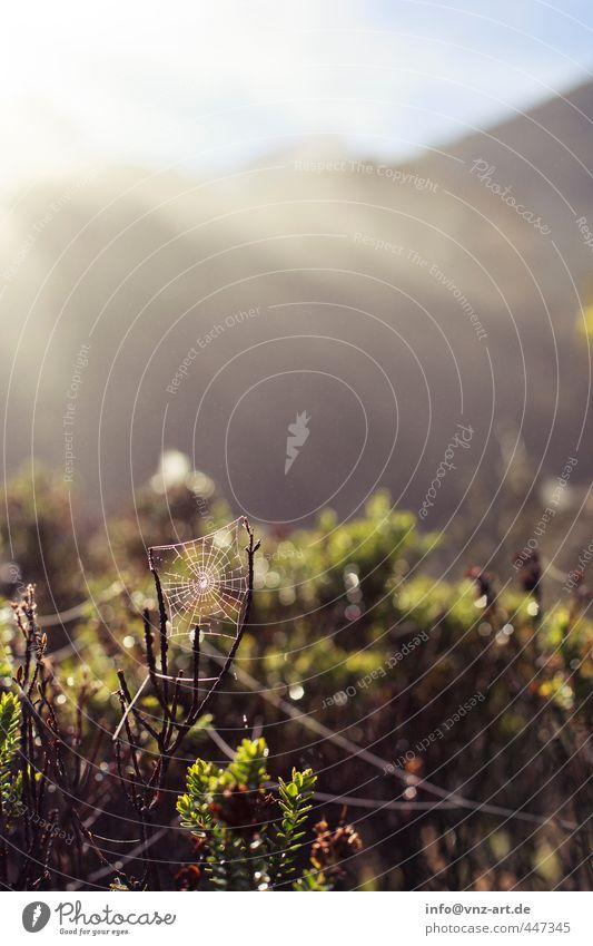 Spider Umwelt Natur Landschaft Pflanze Tier Sonne Sonnenlicht Sommer Sträucher Wald Urwald Spinne Gefühle Spinnennetz Tau Farbfoto Außenaufnahme Menschenleer