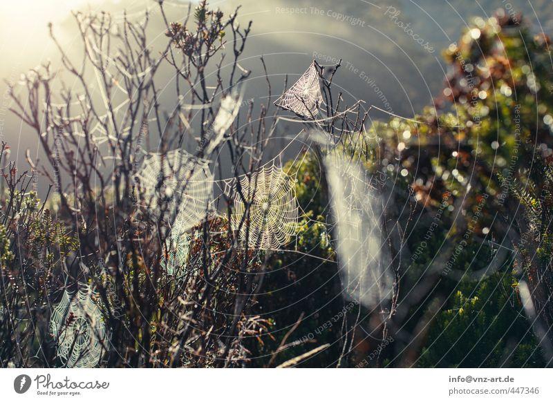 Spider2 Umwelt Natur Landschaft Pflanze Tier Sonne Sonnenaufgang Sonnenuntergang Sonnenlicht Baum Gras Sträucher Wildpflanze Wald Urwald Spinne Tau Spinnennetz