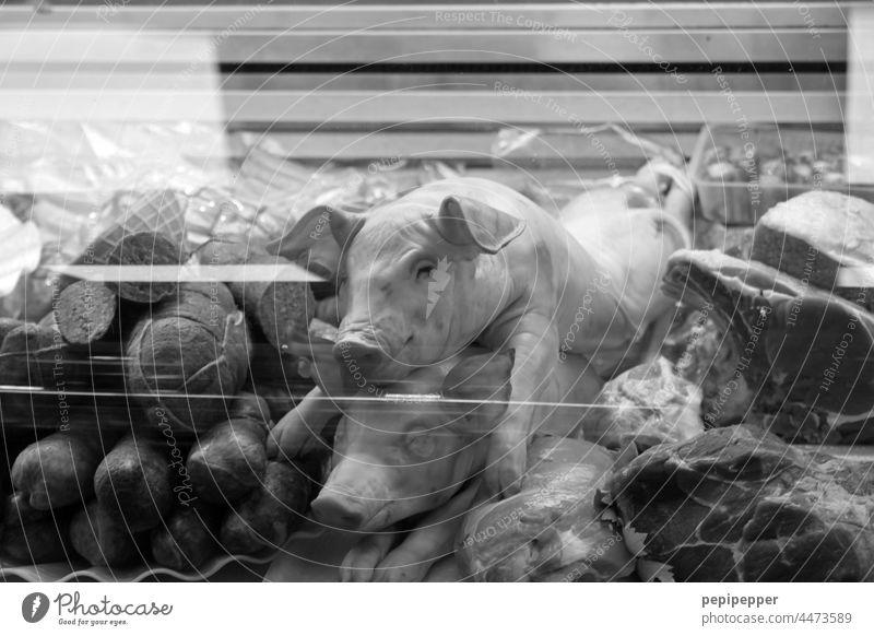 Schweine in einer Metzger-Vitrine Metzgerei Metzgervritine Fleisch Ernährung Lebensmittel Wurstwaren Tod Schlachtung Totes Tier Nutztier tot wurst