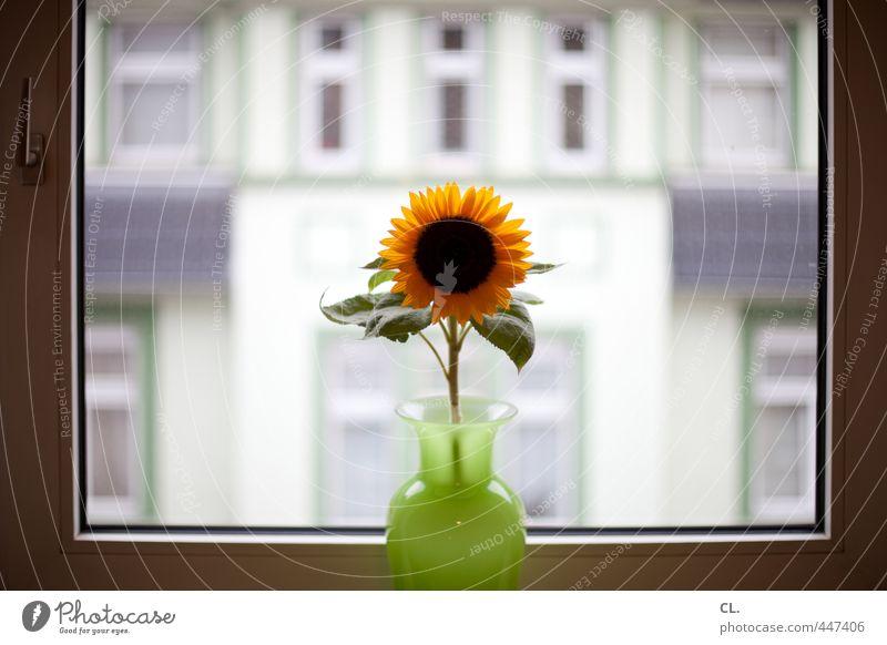 lass die sonne rein Häusliches Leben Wohnung Innenarchitektur Dekoration & Verzierung Raum Sommer Pflanze Blume Blatt Blüte Sonnenblume Stadt Haus Mauer Wand
